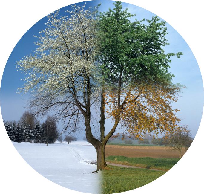 Jahreszeiten_Wachstum.jpg